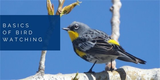 Basics of Bird Watching - Free Class