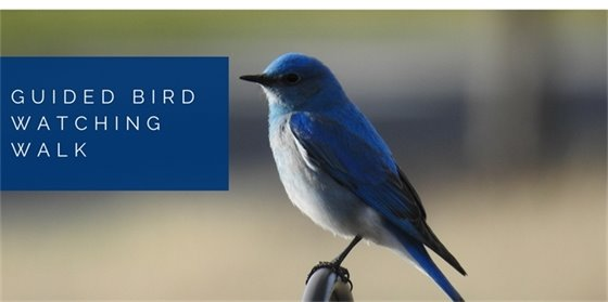 Guided Bird Watching Walk - Free Environmental Program